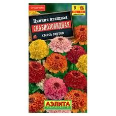 Семена Цинния Скабиозовидная, смесь окрасок
